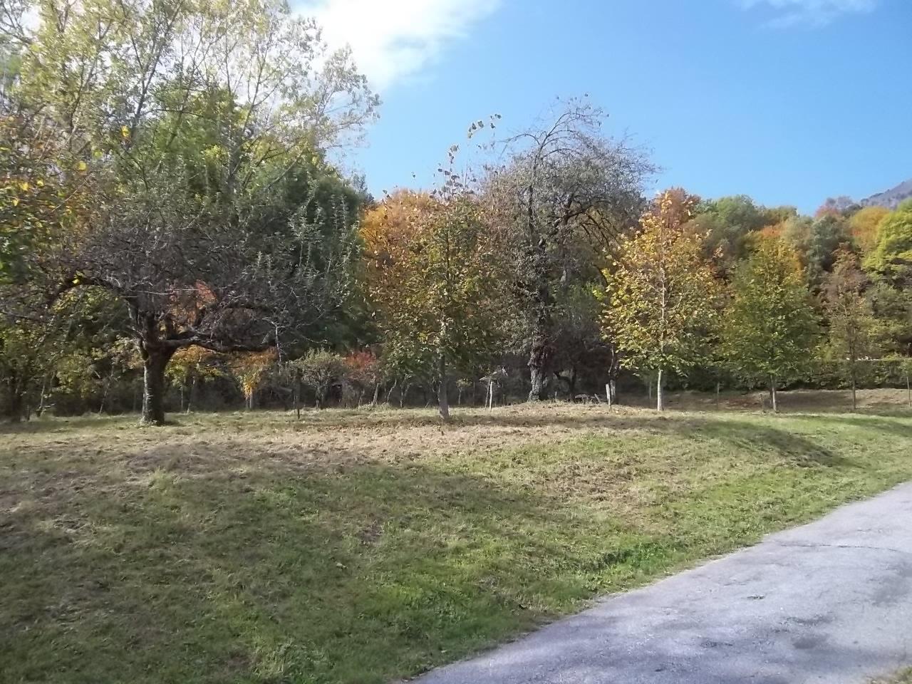 Entretien espaces verts patrick jardinage paysagiste for Paysagiste entretien espaces verts